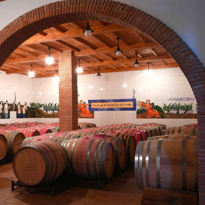 Discover the winery